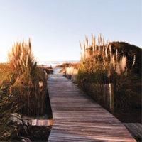 wild-dunes-01
